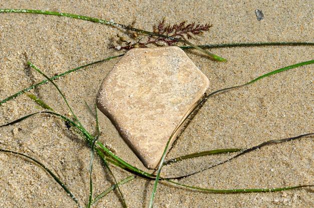 Seashore Art
