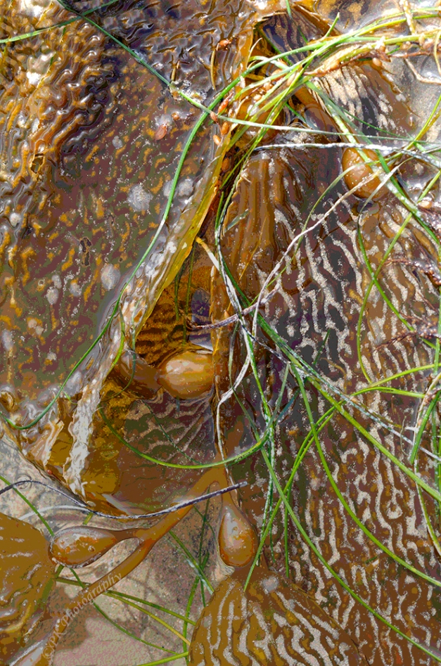 Strewn Seaweed
